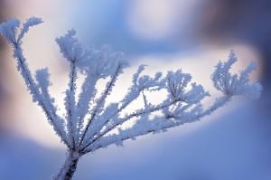 jezelf opladen: een winterslaap houden