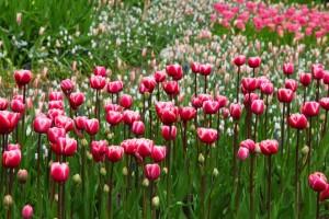 gebruik je lente energie voor rust in je hoofd