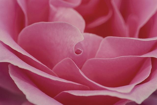 valentijnsdag, de dag van de zelfliefde