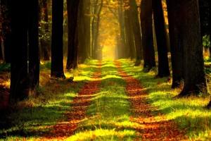 dromen over het bos