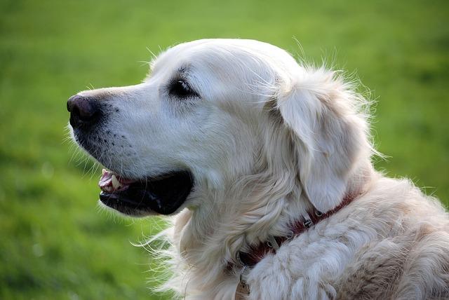 dromen over honden