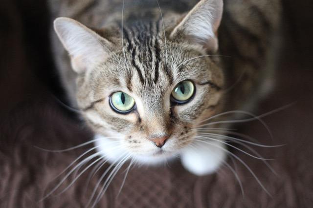 dromen over katten