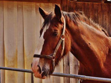 dromen over paarden