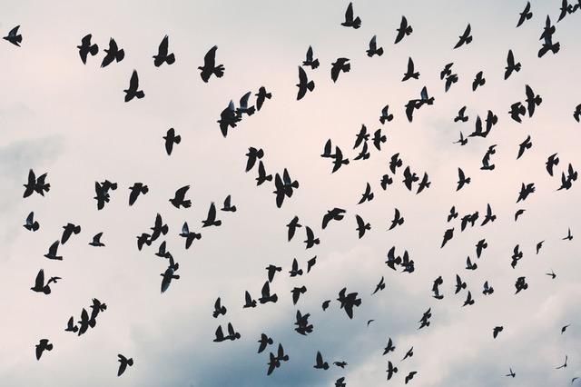 dromen over vogels