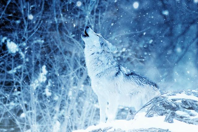 dromen over wolven
