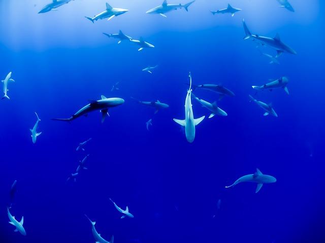 dromen over haaien