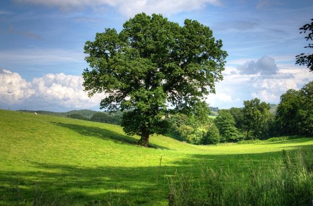 dromen over bomen