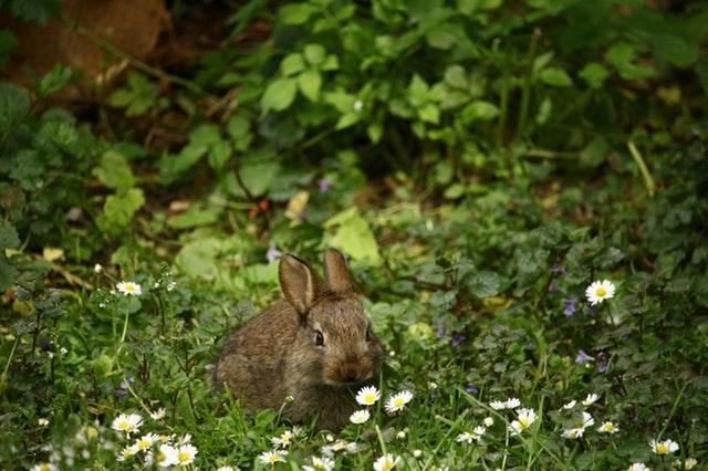 dromen over konijnen