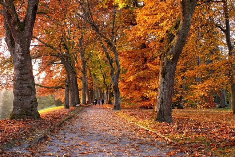 hooggevoeligheid en gebalanceerd de herfst ingaan