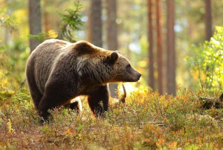 dromen over beren
